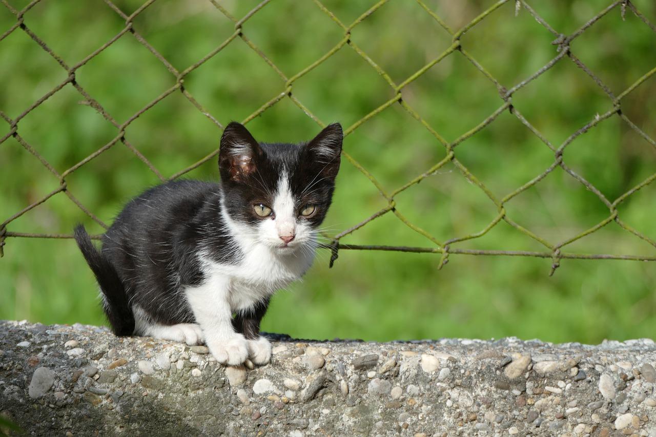 cat-4550096_1280