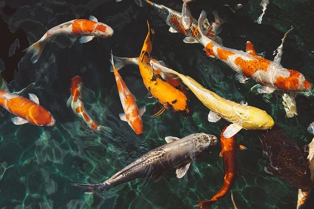 Moderní způsoby sledování ryb