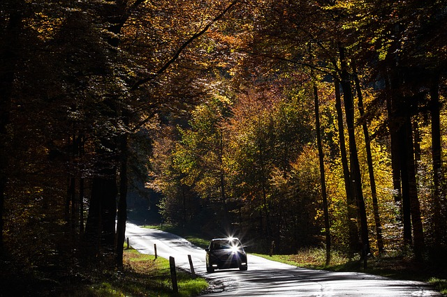 silnice v lese.jpg